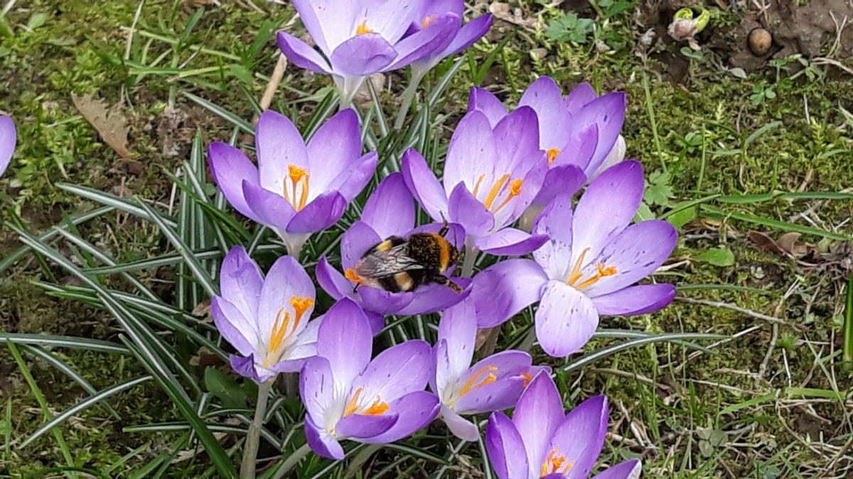 Frühling im Gemeindegarten